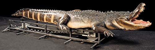 Back from the Grave Attack Alligator Animatronic Prop