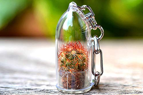Copper King Cactus Terrarium Keychain Accessory. Gifts for Women, Gifts for Men. Nature Gift. …