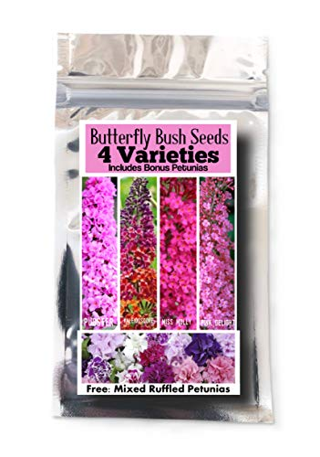 Bulk 4 Butterfly Bush Seeds 550 Seeds +4 Plant Markers & Free Petunias