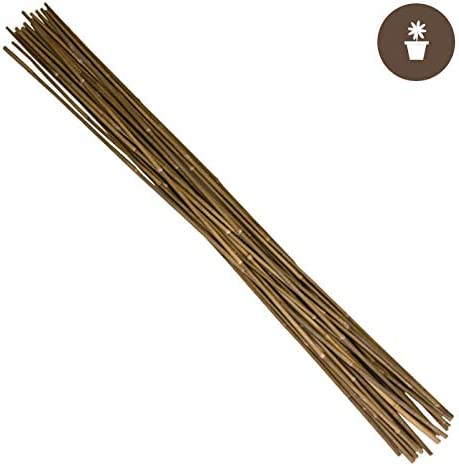 Hydrofarm Hgbb6 6/' Natural Bamboo Stake Pack Of 25