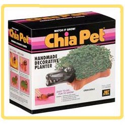 Shrek Alarm Clock - Chia Crocodile-help the Kids Grow Chia Crocodile with Alarm Clock!