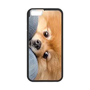 3D Bumper Plastic Case Of Raccoon customized case For Iphone 4/4s