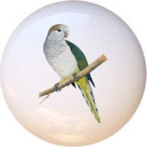 Quaker Parakeet - Quaker Parakeet Bird Decorative Glossy Ceramic Drawer Pull Knob
