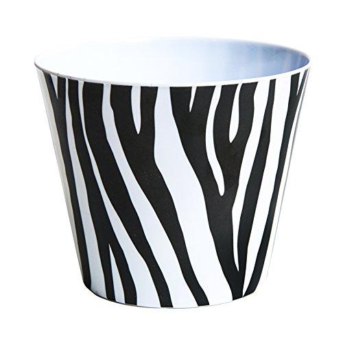 Zebra Kitty - 5