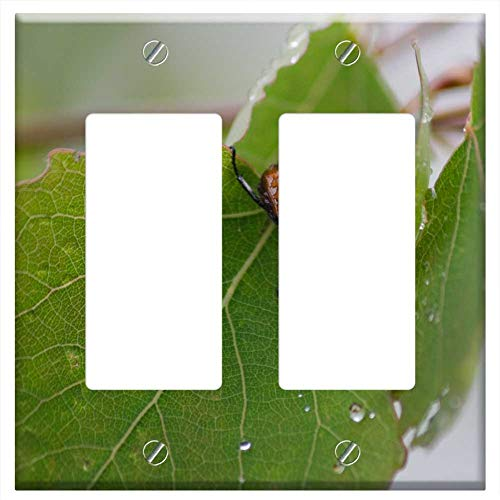 Switch Plate Double Rocker/GFCI - Leaf Bettle Bettle Leaf Insect Nature Bug Life