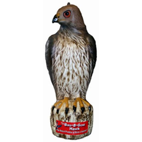 Bird Gone MMRTH1 Hawk Decoy product image