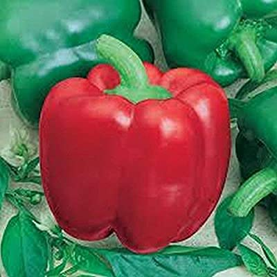 Jupiter Bell Pepper (15) : Garden & Outdoor