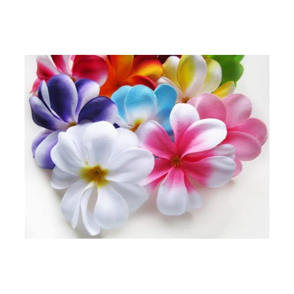 (100) Assorted Hawaiian Plumeria Frangipani Silk Flower Heads – 3″ – Artificial Flowers Head Fabric Floral Supplies Wholesale Lot for Wedding Flowers Accessories Make Bridal Hair Clips Headbands Dress