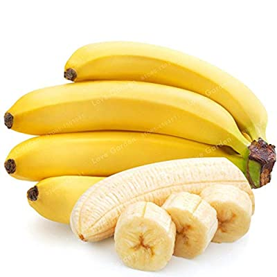 Organic Banana Fruit Tree Seeds Bonsai Dwarf Vegetable 100 pcs Seeds: Home & Kitchen
