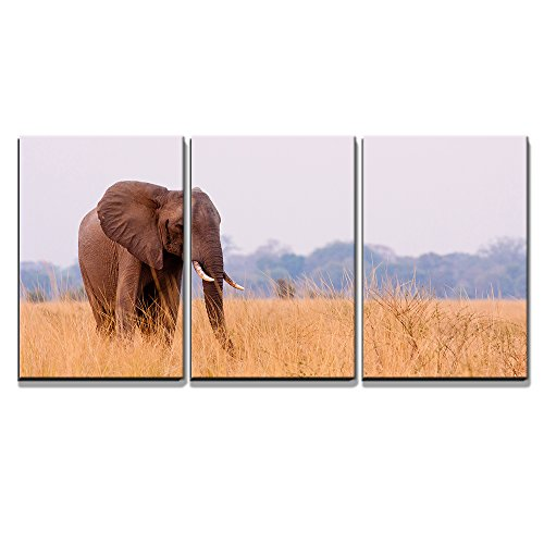 """Wall26 - 3 Piece Canvas Wall Art - African Elephant Feeding in a Savannah Flood Plain - Modern Home Decor Stretched and Framed Ready to Hang - 24\""""x36\""""x3 Panels"""