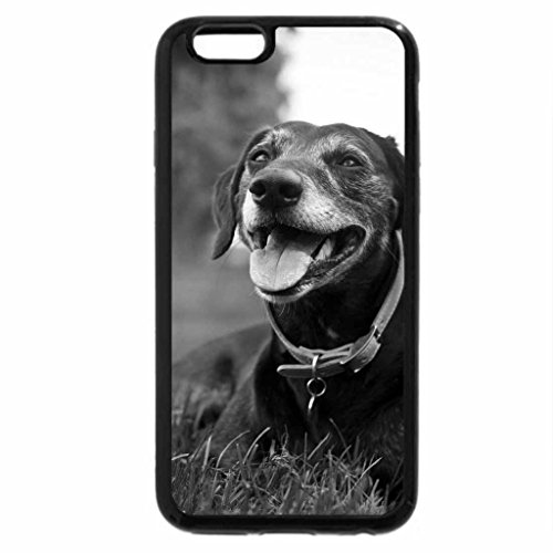 iPhone 6S Plus Case, iPhone 6 Plus Case (Black & White) - The dog on the grass