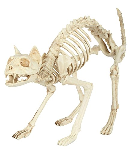 Seasons Skeleton Cat