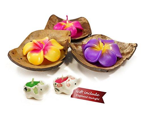 Mongkol Sovenir Shop Tealight Candles Flower Shape Coconut Shell Holder Size 4 inch Mix Color 3 per Pack (Plumeria)