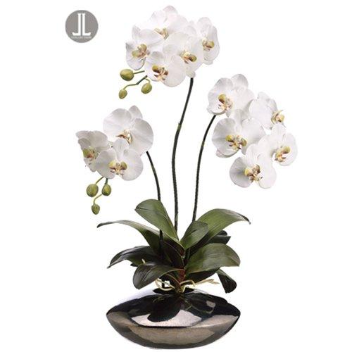 Silk Decor 31-Inch Phalaenopsis Plant, White/Green by Silk Decor