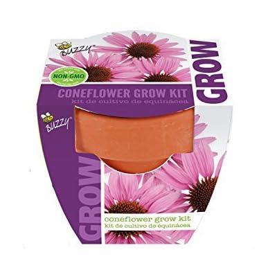 Spring Garden Seed Starter Buzzy Coneflower Grow Kit: Home & Kitchen
