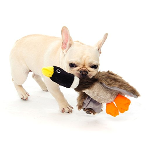 Small Toy Dogs : Dogloveit mallard duck squeaky dog toys for small