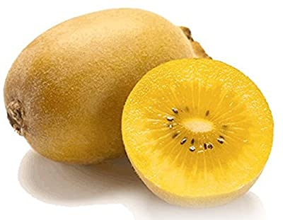 Golden Kiwi Fruit 50 Seeds