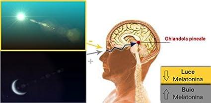 Movimento Salute Gafas para favorire el sueño con lentes Neutre y filtro 100% anti luz azul y ultravioleta. Prevenir el insomnio de la exposición de TV, ...