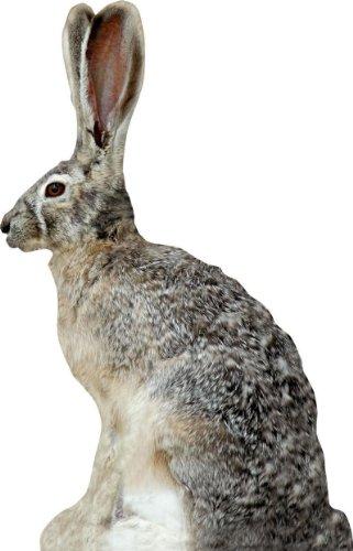 Extreme Dimension Phantom HD Jack Rabbit Decoy