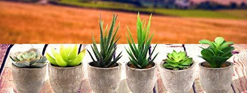 Assorted Decorative Faux Succulent Artificial Succulent Cactus Fake Cacti Plants with Gray Pots, Set of 6