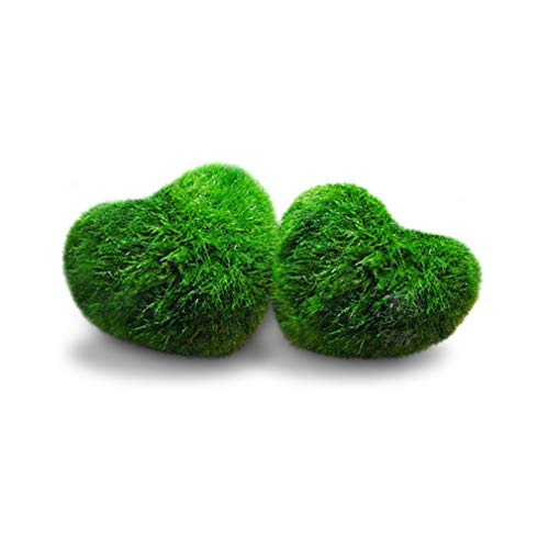 (Luffy Heart Marimo: Unique Heart-Shaped Rare Live Plant That Brings Good Luck, Charm & Prosperity for Every Occasion )
