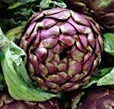 "Purple Italian Globe Artichoke Seeds, 50+ Premium Heirloom Seeds, On Sale""Hot Item!"", (Isla's Garden Seeds) - Non GMO, 90% Germination, Highest Quality Seed, 100% Pure"