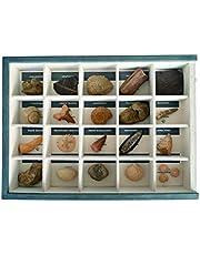 MINERALES Y FOSILES NANO Colección de 20 Fósiles del Mundo en Caja de Madera Natural - Fósiles Reales educativos de Gran tamaño con Hoja de descripción. Kit Geología para niños
