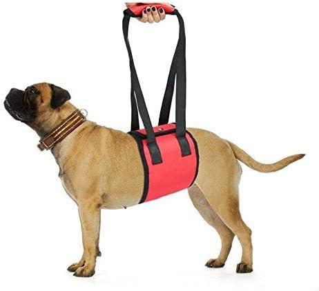 QNMM Mascotas Acción del Perro Entrenamiento Manual con Cinturón ...
