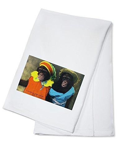St. Louis, Missouri - Forest Park Zoo Chimpanzees in Costume (100% Cotton Kitchen Towel)