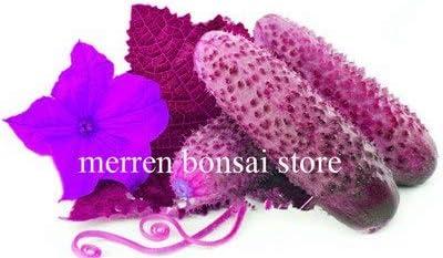 Bloom Green Co. Bonsai de Pepino 200 Piezas Japonã©s Raro Pãºrpura ...