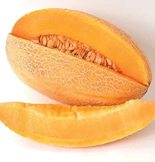 David's Garden Seeds Fruit Cantaloupe Sweet Granite D459 (Orange) 50 Non-GMO, Open Pollinated Seeds