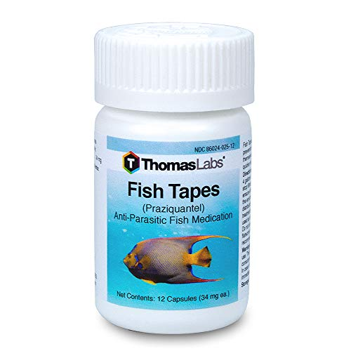 thomas labs fish - 4
