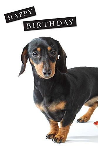 Dachshund Dog Birthday Greeting Card (Jack Russell Dachshund)