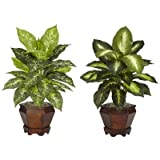 Assorted Dieffenbachia Silk Plant w/ Wood Pot - (Set of 2)