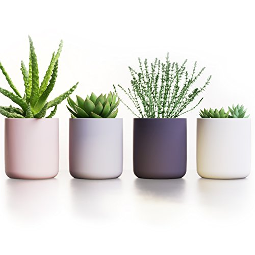 "- Succulent Pots Ceramic Planters Set of 4 | Cactus Flower Plant Pots | Modern Design 3.7"" high Containers in White Gray Pink & Black by Ovillow"
