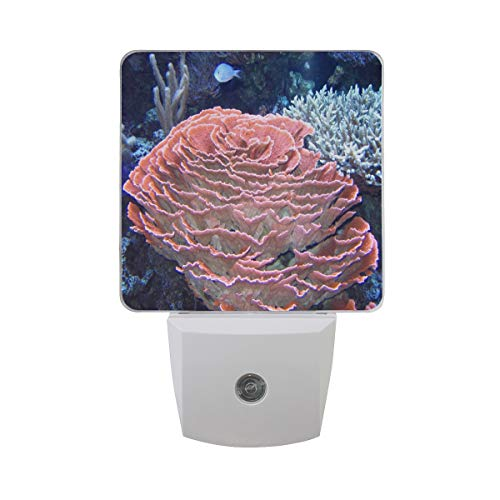 (Night Lamp Importance of Coral Reefs Night Light LED Sensor Auto on/Off Led Plug in Wall Lights 2 Pack)