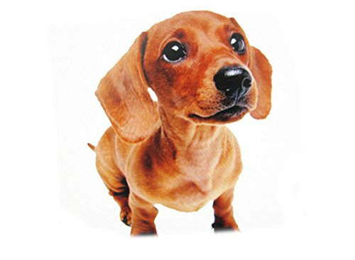 His Puppy - 9