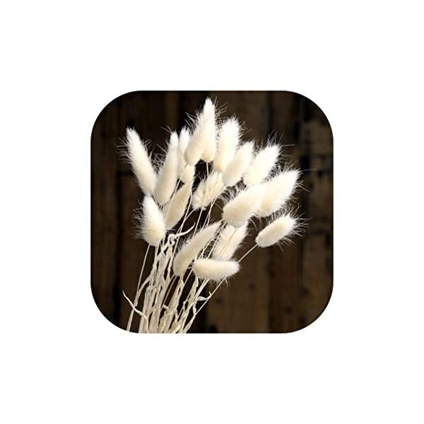 Natural 20Pcs Dried Flower Rabbit Tail Grass Foxtail Dog Tail Grass Branch DIY Flowers Wedding Decoration for Home Party Office,White