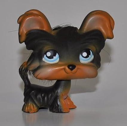 Amazoncom Shih Tzu 141 Dark Brown Blue Eyes Yorkie Littlest
