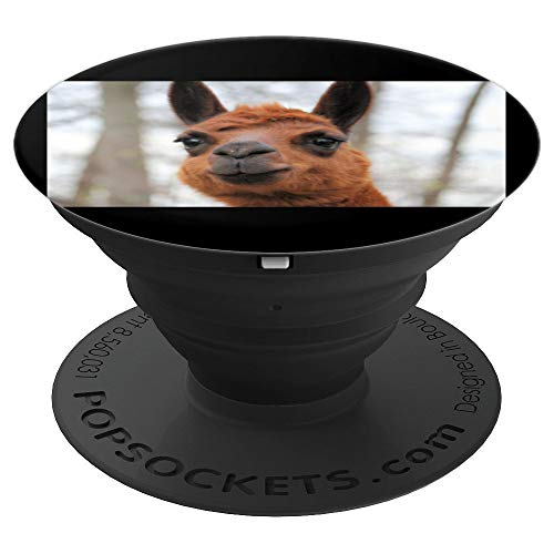 Cute Alpaca Llama Farm Animal Photo Photograph Picture - PopSockets Grip and Stand for Phones and - Photograph Farm