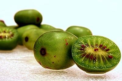 Hardy Kiwi, Actinidia Arguta, Vine 50 Seeds