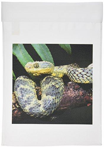 3dRose fl_83957_1 African Bush Viper Snake-NA02 DNO0444-David Northcott Garden Flag, 12 by 18-Inch (Bush Viper)