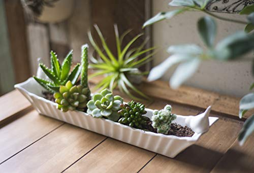 Creative Co-Op Long White Ceramic Cracker Dish with Two Birds by Creative Co-op (Image #4)