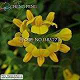 ASTONISH Seeds: Green: Promotion!100pcs Rare Coronilla Seeds Beautiful Flower Seeds The Budding Rate 95% Garden Plant for Kids Gift