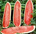 Watermelon Jubilee Great Heirloom Garden Vegetable 40 Seeds