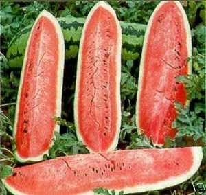 Watermelon Jubilee Great Heirloom Garden Vegetable 40 Seeds