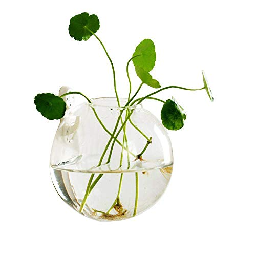 rrarium Glass Wall Planter-Glass Planters Wall Hanging Planters Round Glass Plant Pots Air Plant Holder Flower Vase Air Plant Terrariums or Wall Wall Mounted Fish Bowl Fish Bowl ()