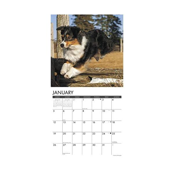 Just Australian Shepherds 2020 Wall Calendar (Dog Breed Calendar) 2