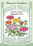 Zinnia Raggedy Anne
