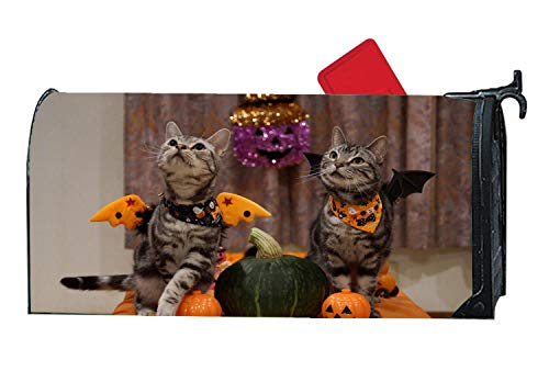 Bats Wings Cats Ready Halloween Pumpkins Personalized Magnetic